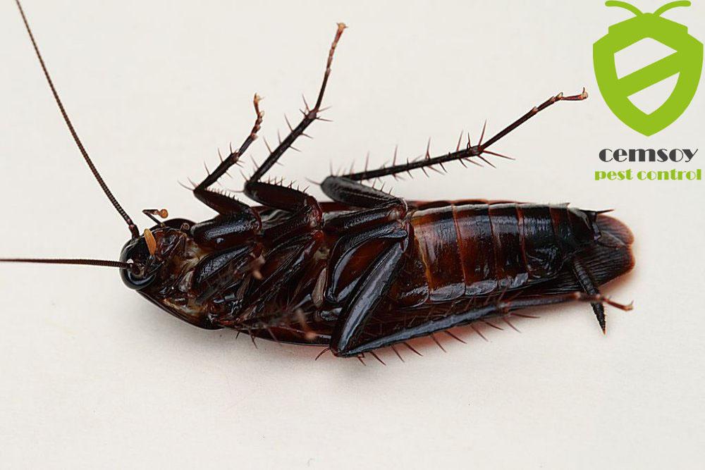 aydın hamam böceği ilaçlaması